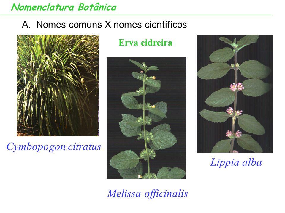 A.Nomes comuns X nomes científicos Nomenclatura Botânica Melissa officinalis Lippia alba Cymbopogon citratus Erva cidreira