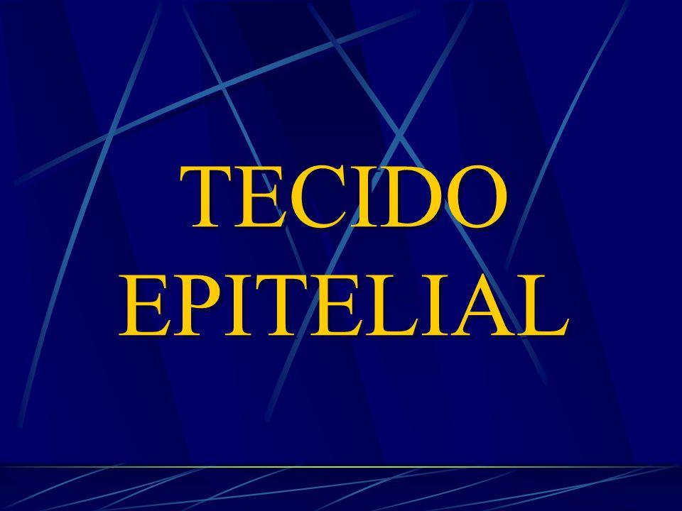 FUNÇÕES BÁSICAS: revestimento e secreção TECIDO EPITELIAL FUNÇÕES BÁSICAS: revestimento e secreção