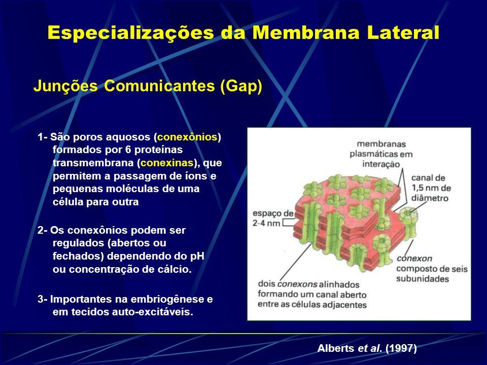 Junções Comunicantes (Gap) Especializações da Membrana Lateral 1- São poros aquosos (conexônios) formados por 6 proteínas transmembrana (conexinas), que permitem a passagem de íons e pequenas moléculas de uma célula para outra 2- Os conexônios podem ser regulados (abertos ou fechados) dependendo do pH ou concentração de cálcio.