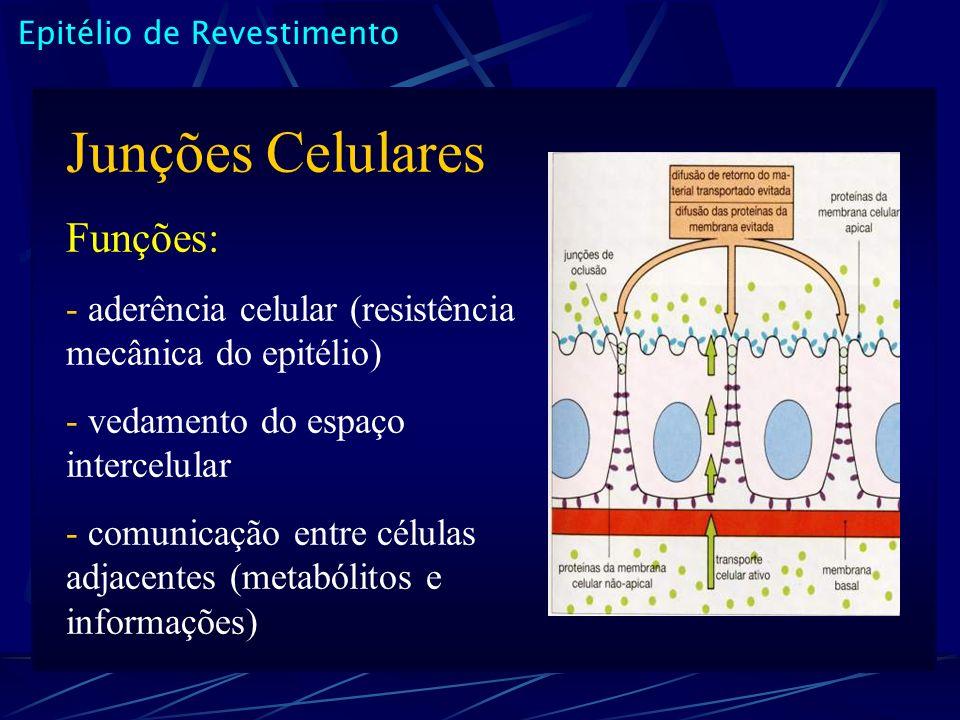 Epitélio de Revestimento Junções Celulares Funções: - aderência celular (resistência mecânica do epitélio) - vedamento do espaço intercelular - comunicação entre células adjacentes (metabólitos e informações)