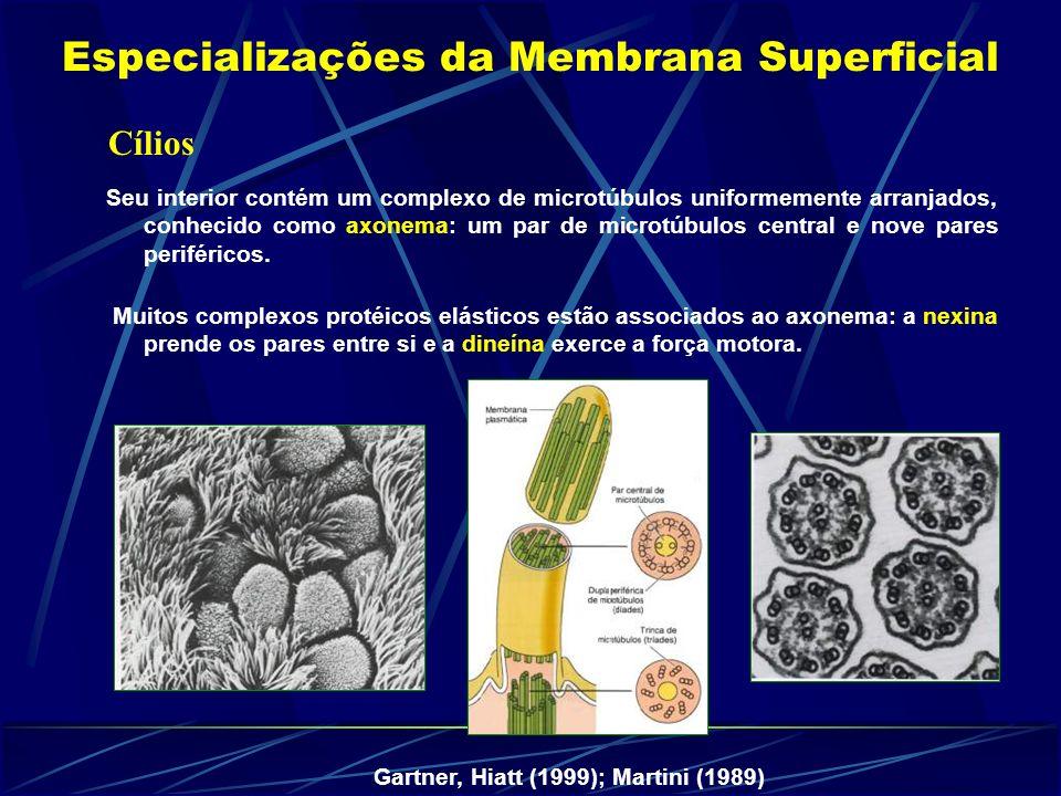 Cílios Seu interior contém um complexo de microtúbulos uniformemente arranjados, conhecido como axonema: um par de microtúbulos central e nove pares periféricos.