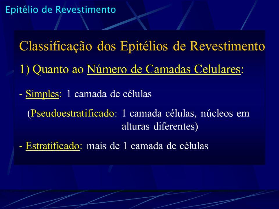 Epitélio de Revestimento Classificação dos Epitélios de Revestimento 1) Quanto ao Número de Camadas Celulares: - Simples: 1 camada de células (Pseudoestratificado: 1 camada células, núcleos em alturas diferentes) - Estratificado: mais de 1 camada de células