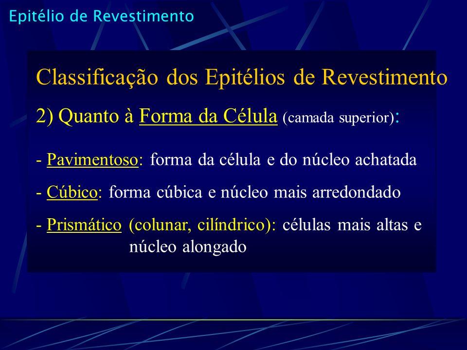 Epitélio de Revestimento Classificação dos Epitélios de Revestimento 2) Quanto à Forma da Célula (camada superior) : - Pavimentoso: forma da célula e do núcleo achatada - Cúbico: forma cúbica e núcleo mais arredondado - Prismático (colunar, cilíndrico): células mais altas e núcleo alongado