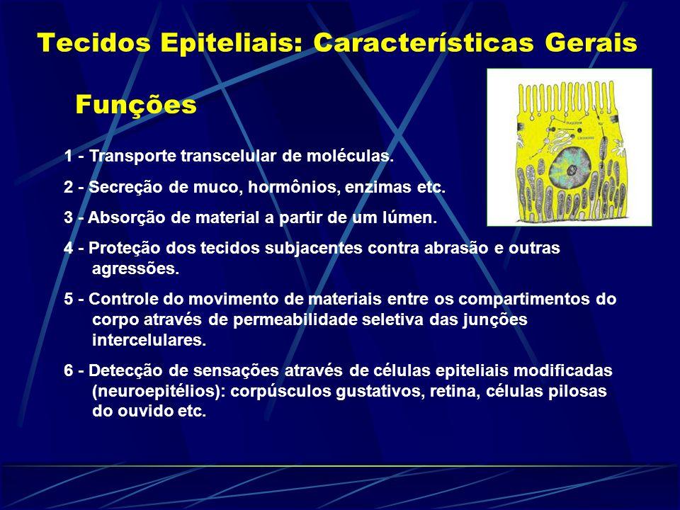 Tecidos Epiteliais: Características Gerais Funções 1 - Transporte transcelular de moléculas. 2 - Secreção de muco, hormônios, enzimas etc. 3 - Absorçã