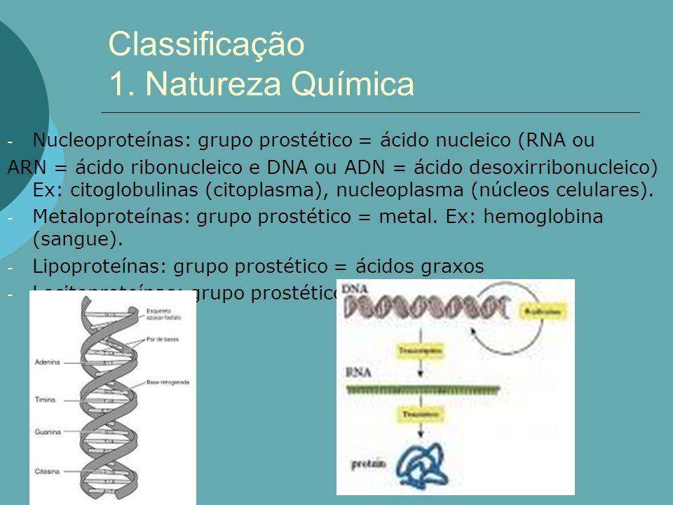 - Nucleoproteínas: grupo prostético = ácido nucleico (RNA ou ARN = ácido ribonucleico e DNA ou ADN = ácido desoxirribonucleico) Ex: citoglobulinas (ci
