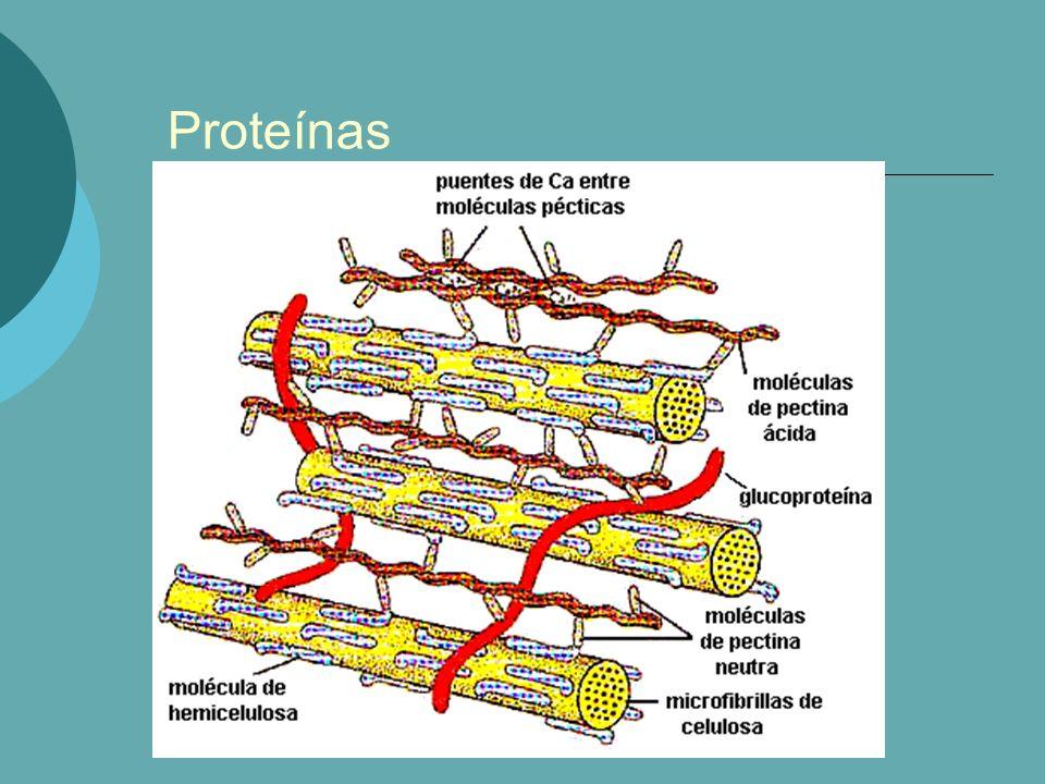 Definição/Composição: Exemplo: - Citocromo C: 13.000 - Ribonuclease: 14.000 - Mioglobulina: 17.000 - Gliadina: 28.000 - Pepsina: 35.500 - Insulina: 36.000 - Ovoalbunina: 45.000 - Hemoglobina: 68.000 - Soroglobulina: 180.000 - Caseína: 375.000 - Fribrinogênio: 450.000 - Tiroglobulina: 630.000 - Hemocianina: 2.800.000 - Vírus: 250.000.000 Composição: Contém sempre: - elementos organógenos: C, H, O, N - menor prorporção: S, P, I, Br o Composição percentual: - C: 50 à 55% - H: 6 à 7% - O: 19 à 24% - N: 15 à 19% - S: 0 à 2,5%