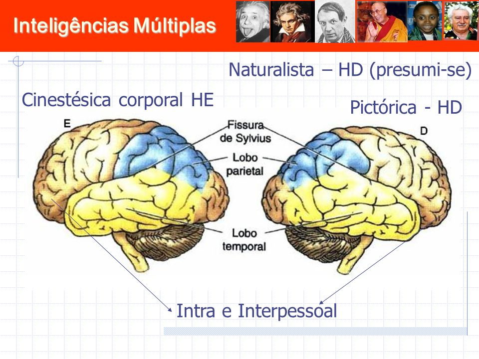 Inteligências Múltiplas Naturalista – HD (presumi-se) Cinestésica corporal HE Intra e Interpessoal Pictórica - HD