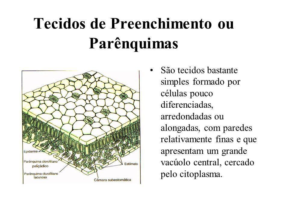 Tecidos de Preenchimento ou Parênquimas São tecidos bastante simples formado por células pouco diferenciadas, arredondadas ou alongadas, com paredes r
