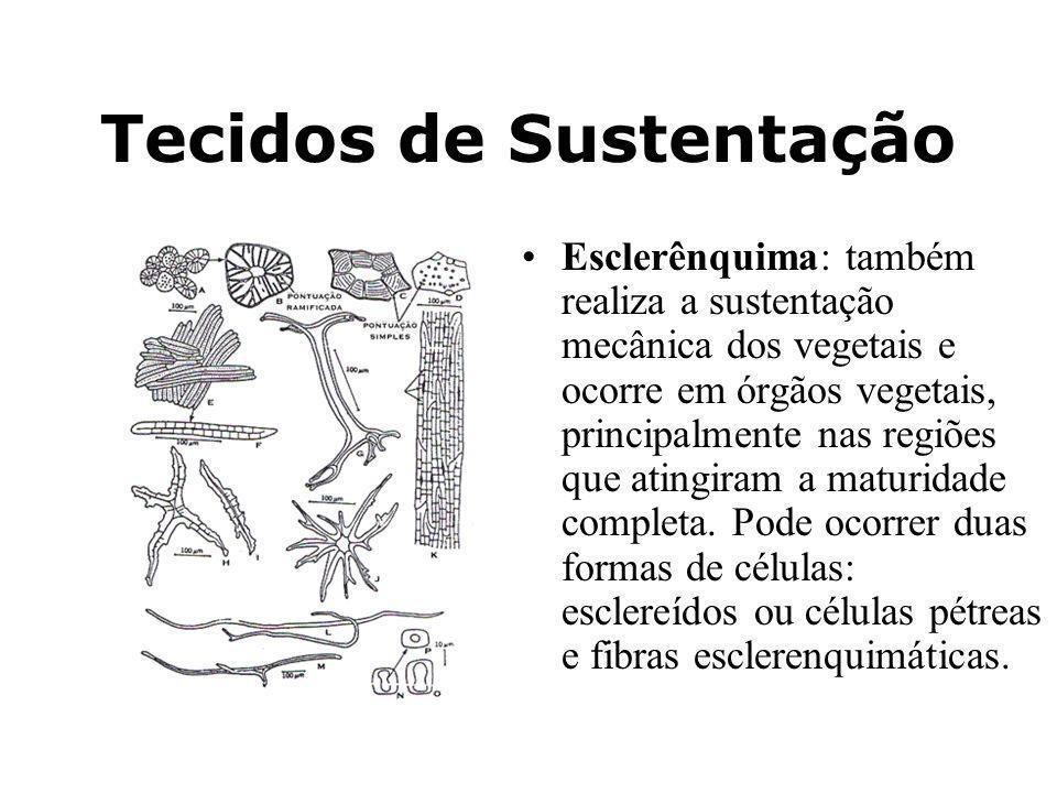 Tecidos de Sustentação Esclerênquima: também realiza a sustentação mecânica dos vegetais e ocorre em órgãos vegetais, principalmente nas regiões que a