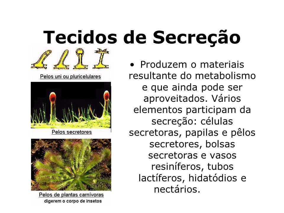 Tecidos de Secreção Produzem o materiais resultante do metabolismo e que ainda pode ser aproveitados. Vários elementos participam da secreção: células