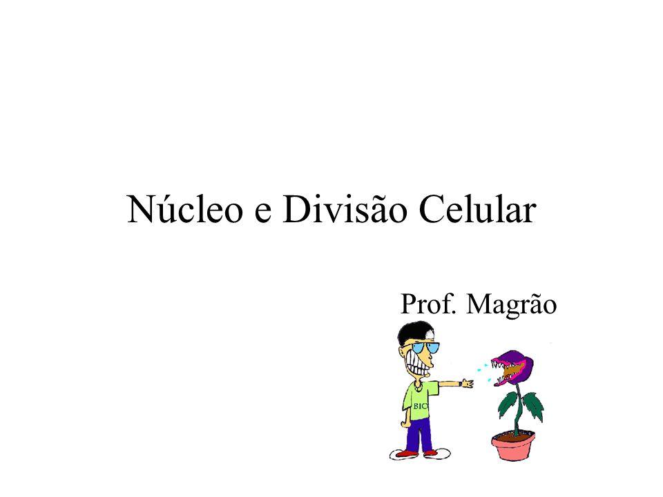 Núcleo e Divisão Celular Prof. Magrão