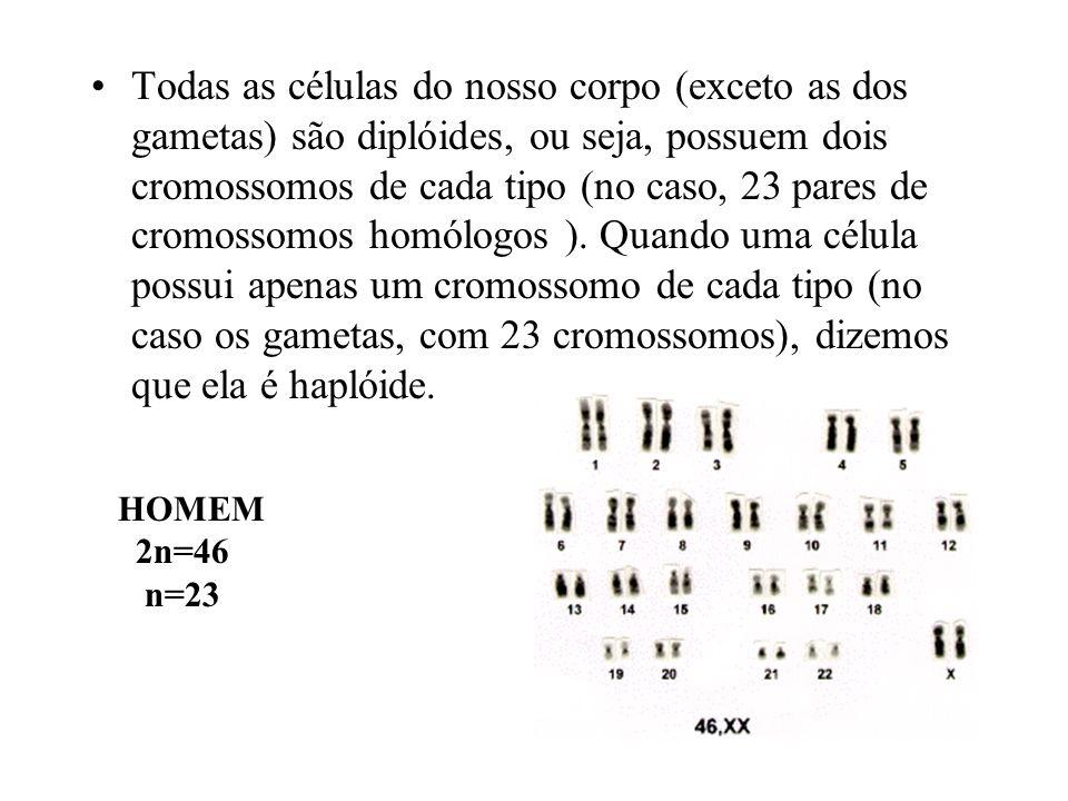 Todas as células do nosso corpo (exceto as dos gametas) são diplóides, ou seja, possuem dois cromossomos de cada tipo (no caso, 23 pares de cromossomo