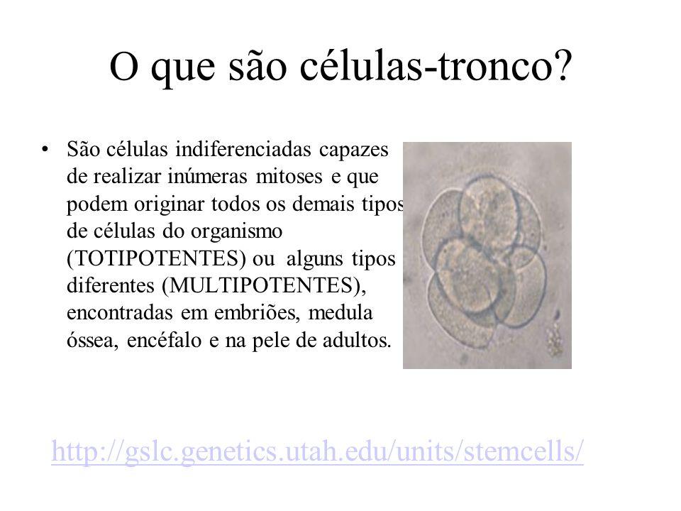 O que são células-tronco? São células indiferenciadas capazes de realizar inúmeras mitoses e que podem originar todos os demais tipos de células do or