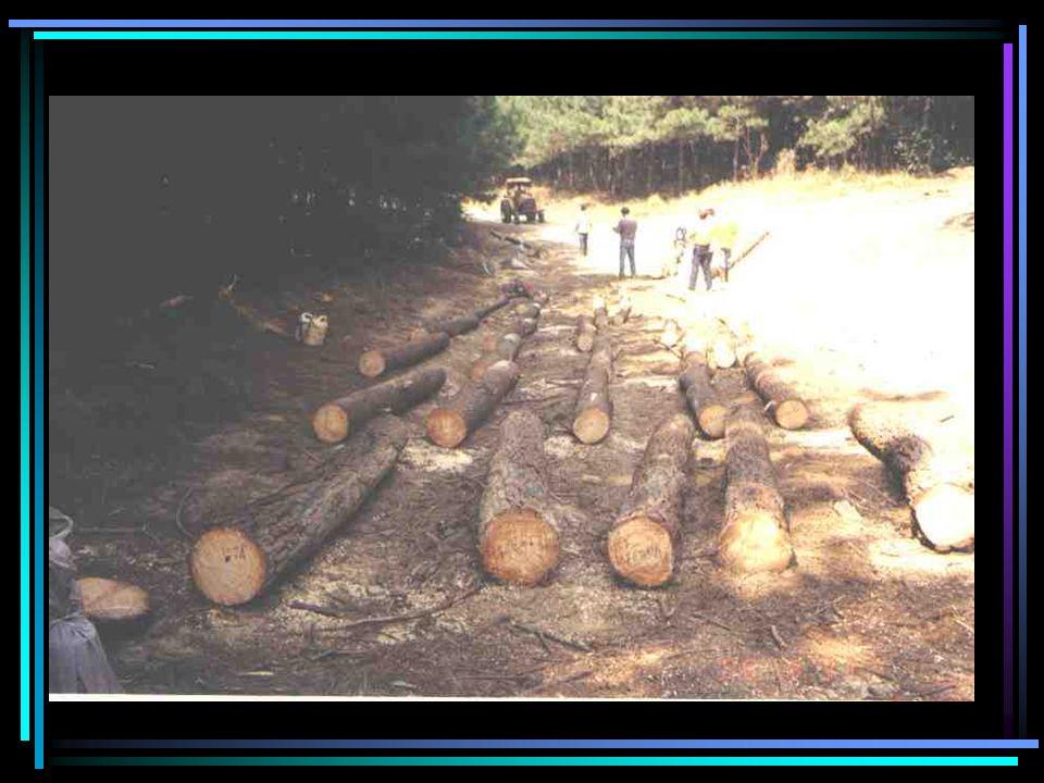 Medir o tronco de uma árvore....