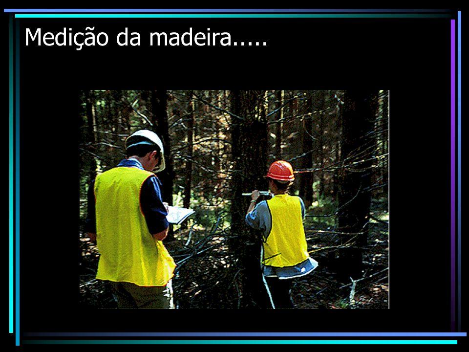Medição da madeira....