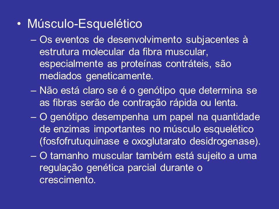 Músculo-Esquelético –Os eventos de desenvolvimento subjacentes à estrutura molecular da fibra muscular, especialmente as proteínas contráteis, são med