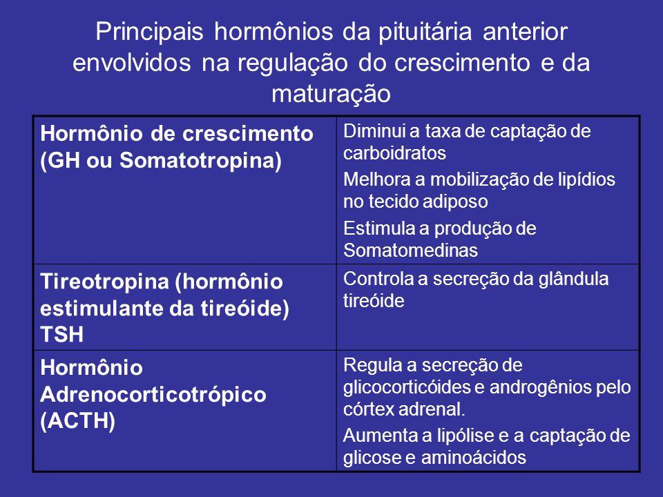 Principais hormônios da pituitária anterior envolvidos na regulação do crescimento e da maturação Hormônio de crescimento (GH ou Somatotropina) Diminu
