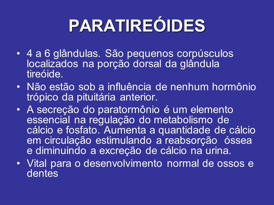 PARATIREÓIDES 4 a 6 glândulas. São pequenos corpúsculos localizados na porção dorsal da glândula tireóide. Não estão sob a influência de nenhum hormôn