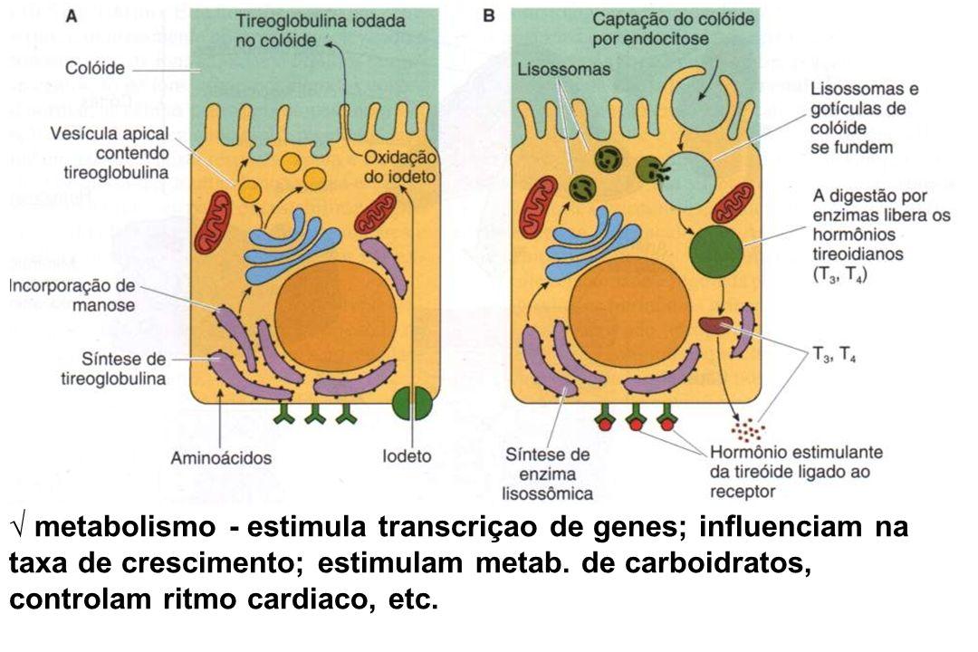 metabolismo - estimula transcriçao de genes; influenciam na taxa de crescimento; estimulam metab. de carboidratos, controlam ritmo cardiaco, etc.
