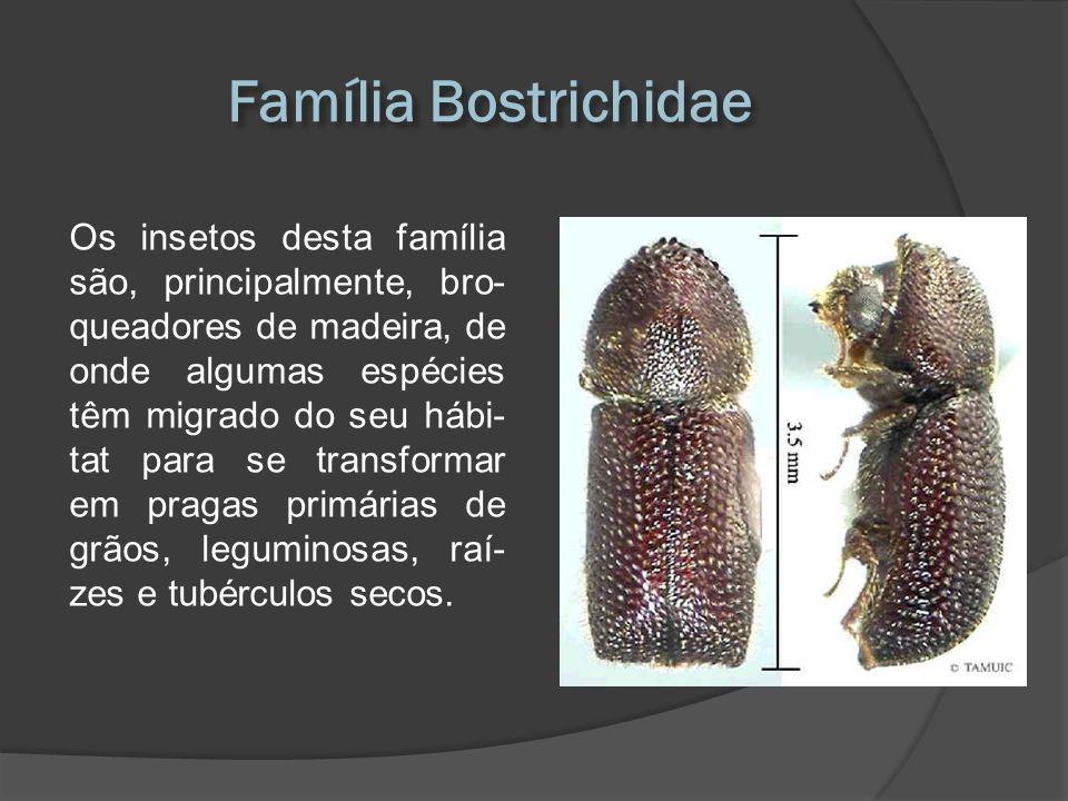Os insetos desta família são, principalmente, bro- queadores de madeira, de onde algumas espécies têm migrado do seu hábi- tat para se transformar em