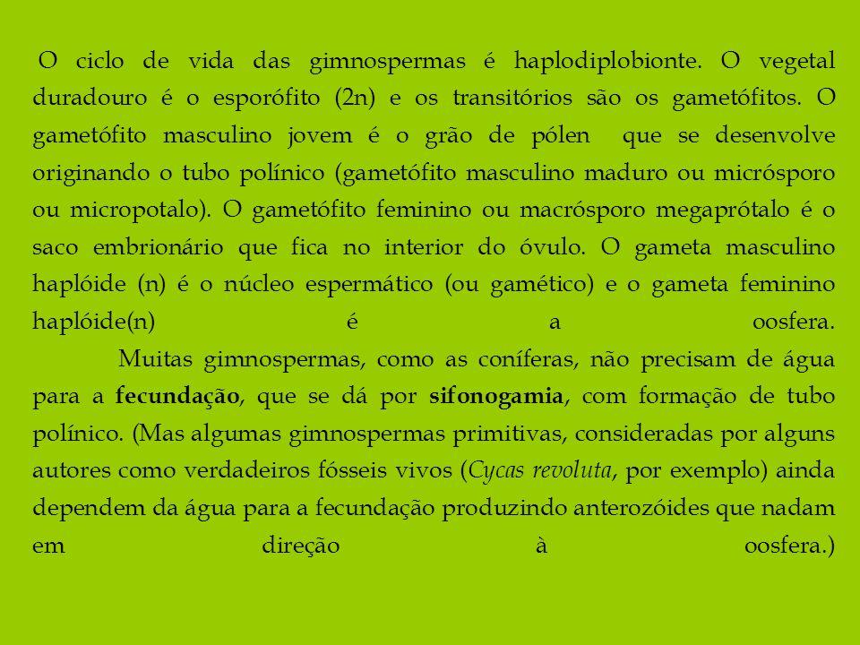 O ciclo de vida das gimnospermas é haplodiplobionte. O vegetal duradouro é o esporófito (2n) e os transitórios são os gametófitos. O gametófito mascul