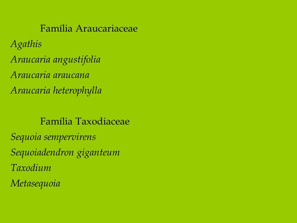 Família Araucariaceae Agathis Araucaria angustifolia Araucaria araucana Araucaria heterophylla Família Taxodiaceae Sequoia sempervirens Sequoiadendron