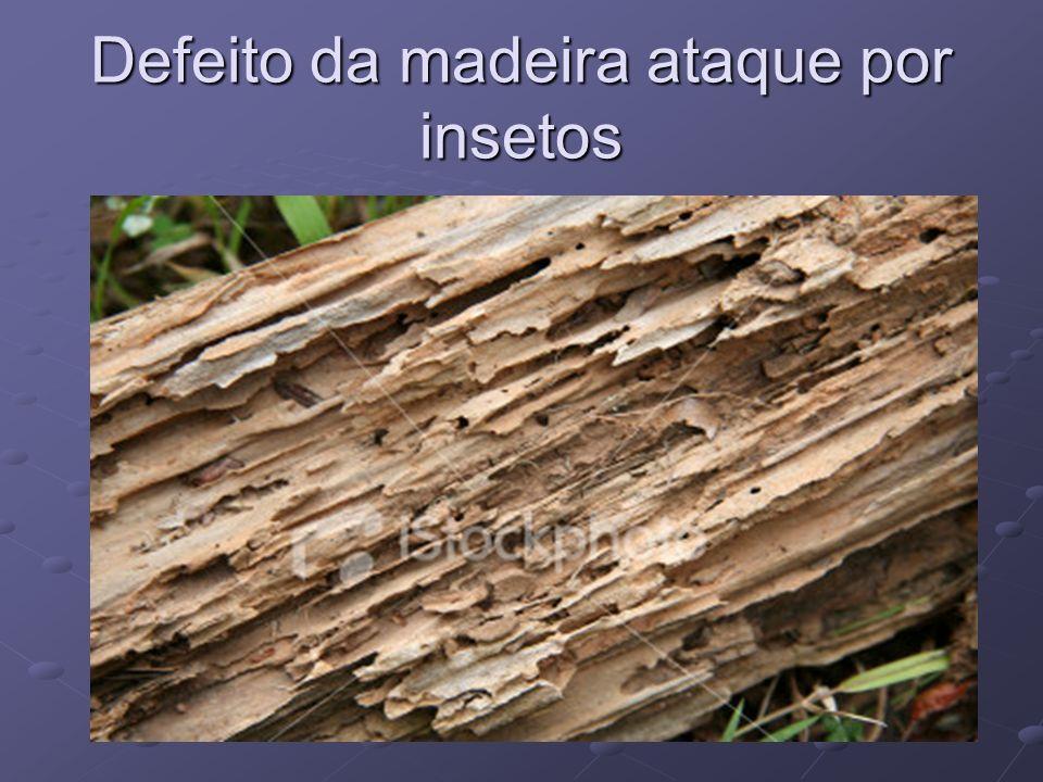 Defeito da madeira ataque por insetos