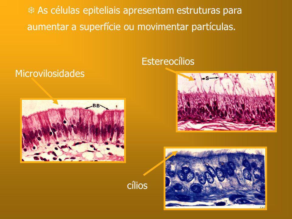 As células epiteliais apresentam estruturas para aumentar a superfície ou movimentar partículas. Microvilosidades Estereocílios cílios