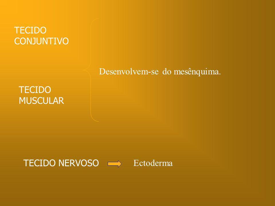 TECIDO CONJUNTIVO Desenvolvem-se do mesênquima. TECIDO MUSCULAR TECIDO NERVOSO Ectoderma