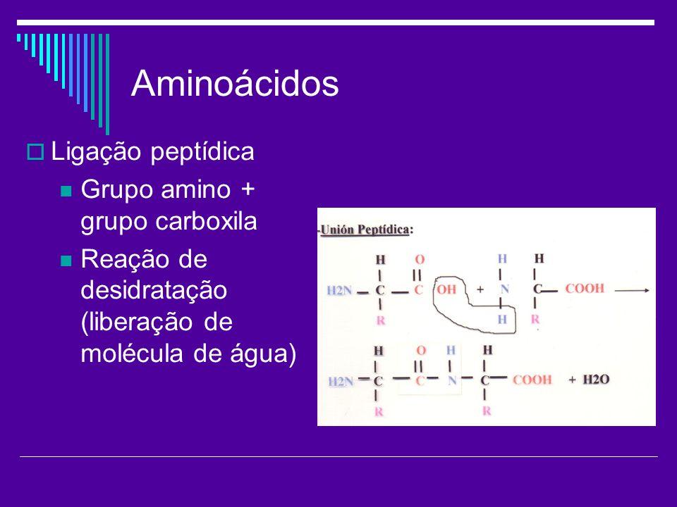 Aminoácidos Ligação peptídica Grupo amino + grupo carboxila Reação de desidratação (liberação de molécula de água)