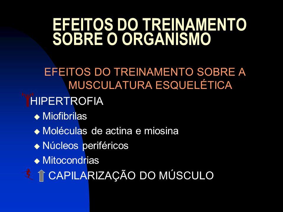 EFEITOS DO TREINAMENTO SOBRE O ORGANISMO EFEITOS DO TREINAMENTO SOBRE A MUSCULATURA ESQUELÉTICA HIPERTROFIA Miofibrilas Moléculas de actina e miosina