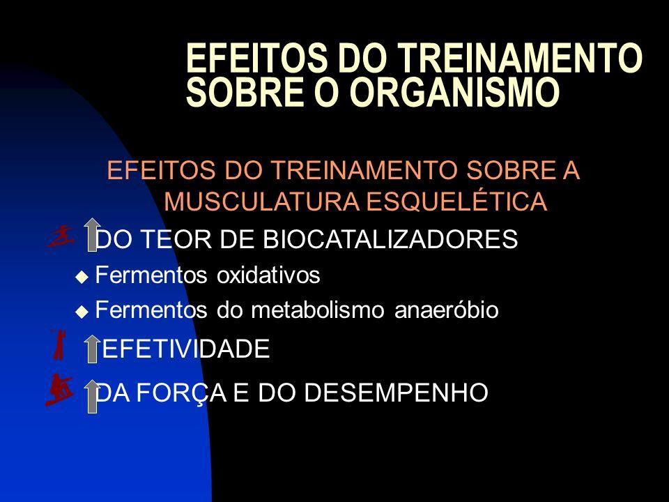 EFEITOS DO TREINAMENTO SOBRE O ORGANISMO EFEITOS DO TREINAMENTO SOBRE A MUSCULATURA ESQUELÉTICA DO TEOR DE BIOCATALIZADORES Fermentos oxidativos Ferme
