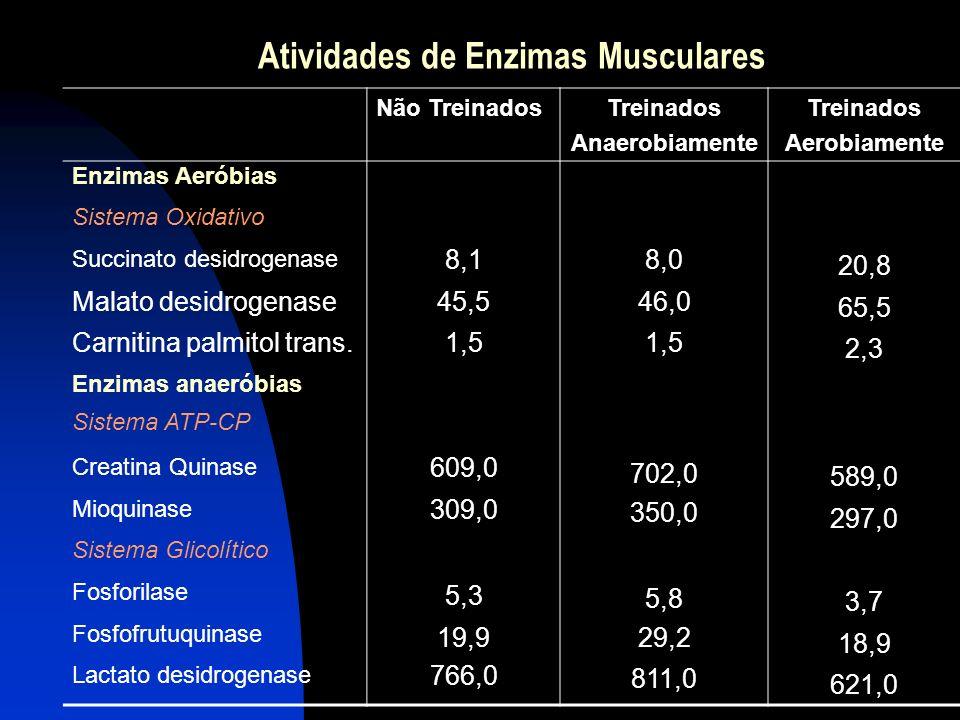 Atividades de Enzimas Musculares Não TreinadosTreinados Anaerobiamente Treinados Aerobiamente Enzimas Aeróbias Sistema Oxidativo Succinato desidrogena