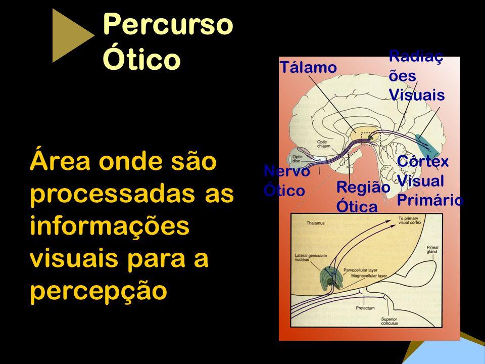 Percurso Ótico Tálamo Área onde são processadas as informações visuais para a percepção Radiaç ões Visuais Região Ótica Nervo Ótico Córtex Visual Prim