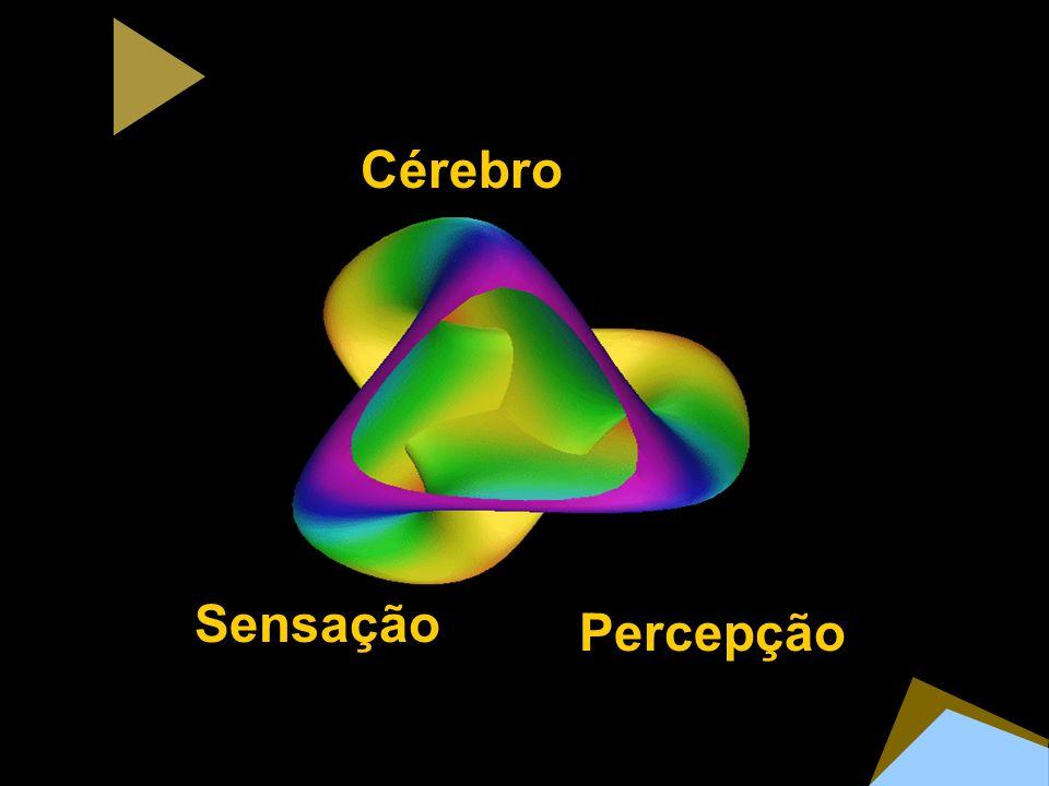 Cérebro Sensação Percepção