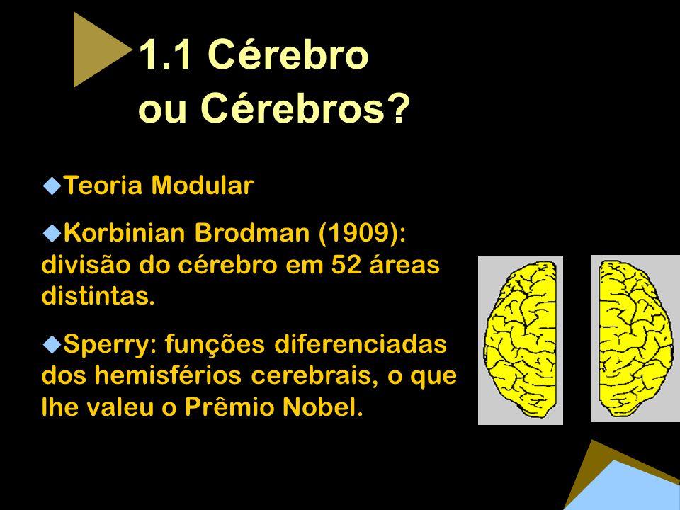 1.1 C é rebro ou C é rebros? Teoria Modular Korbinian Brodman (1909): divisão do cérebro em 52 áreas distintas. Sperry: funções diferenciadas dos hemi