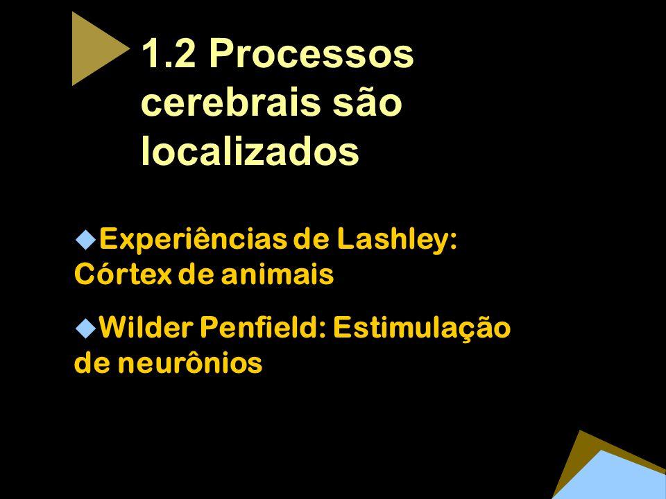1.2 Processos cerebrais são localizados Experiências de Lashley: Córtex de animais Wilder Penfield: Estimulação de neurônios