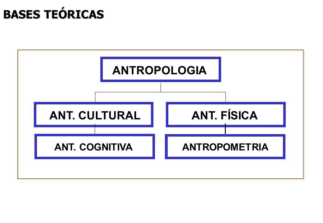 BASES TEÓRICAS ANT. CULTURALANT. FÍSICA ANTROPOLOGIA ANT. COGNITIVAANTROPOMETRIA