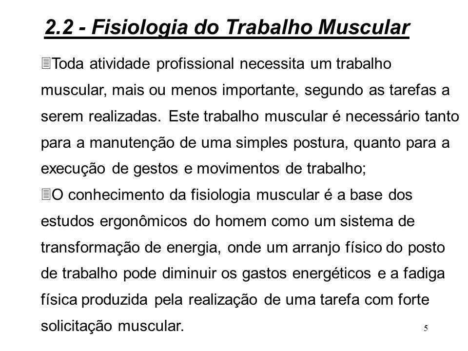 5 3Toda atividade profissional necessita um trabalho muscular, mais ou menos importante, segundo as tarefas a serem realizadas.