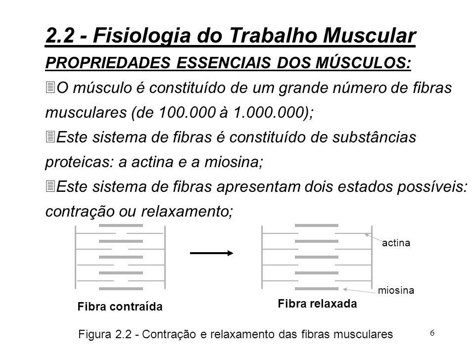 6 PROPRIEDADES ESSENCIAIS DOS MÚSCULOS: 3O músculo é constituído de um grande número de fibras musculares (de 100.000 à 1.000.000); 3Este sistema de fibras é constituído de substâncias proteicas: a actina e a miosina; 3Este sistema de fibras apresentam dois estados possíveis: contração ou relaxamento; Fibra contraída Figura 2.2 - Contração e relaxamento das fibras musculares 2.2 - Fisiologia do Trabalho Muscular Fibra relaxada actina miosina