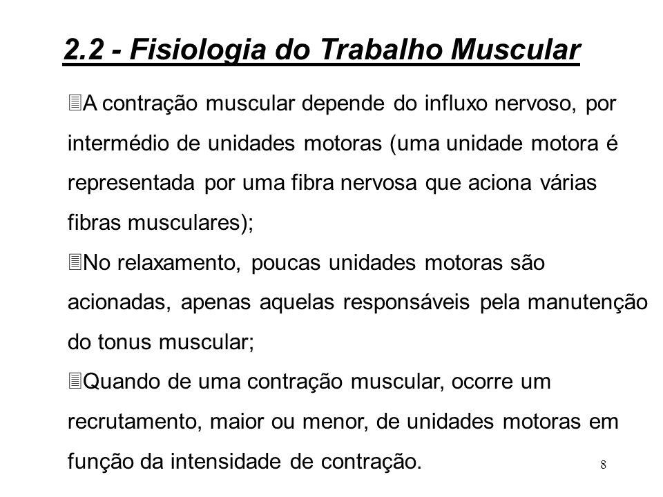 7 Figura 2.3 - Fibras musculares 2.2 - Fisiologia do Trabalho Muscular