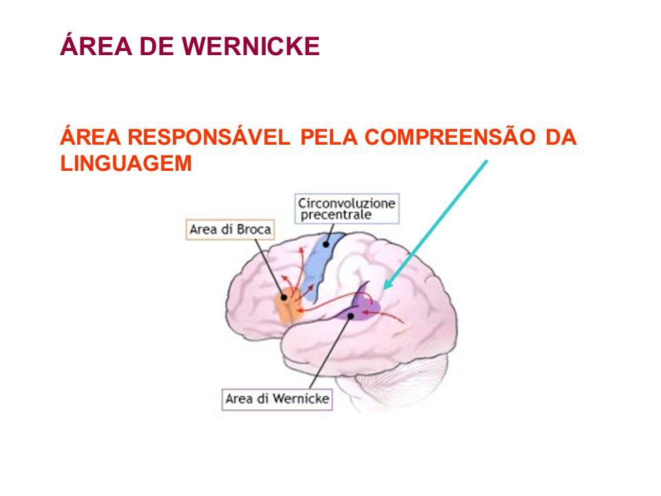 ÁREA DE WERNICKE ÁREA RESPONSÁVEL PELA COMPREENSÃO DA LINGUAGEM