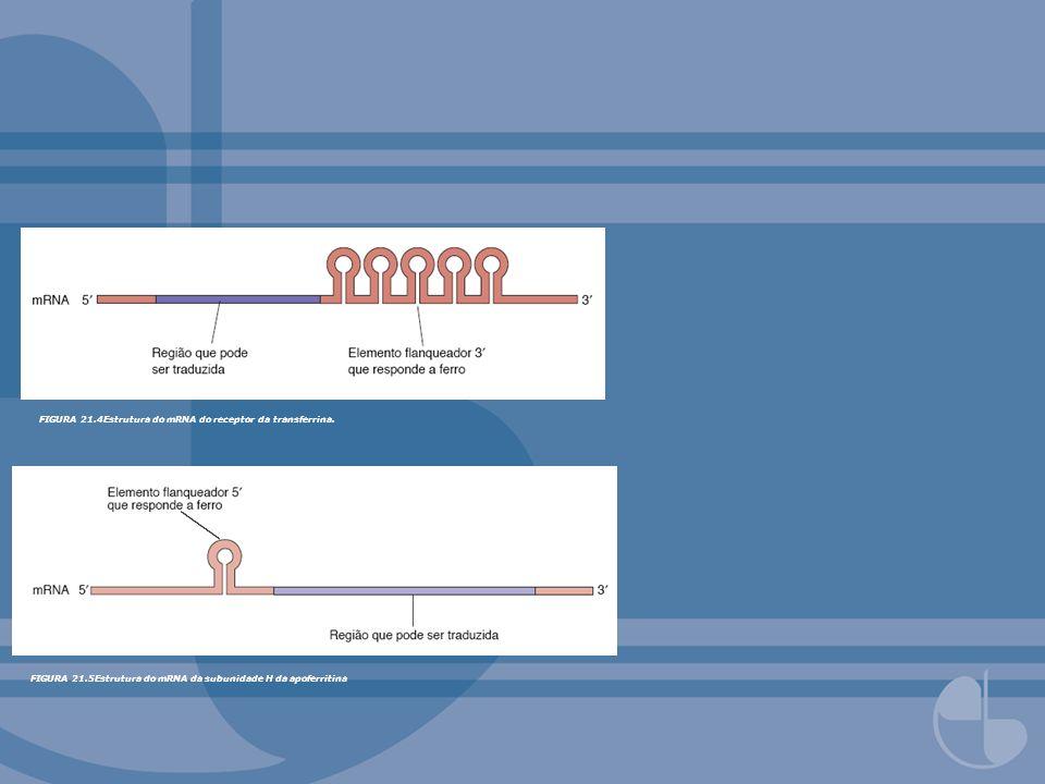 FIGURA 21.4Estrutura do mRNA do receptor da transferrina. FIGURA 21.5Estrutura do mRNA da subunidade H da apoferritina