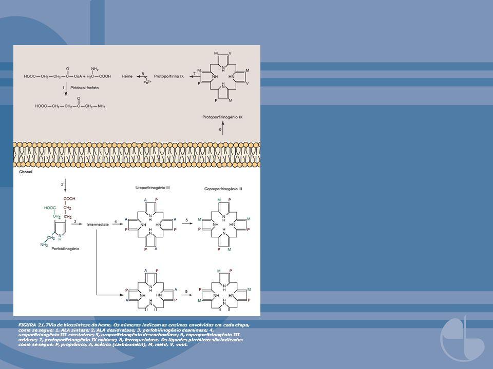 FIGURA 21.7Via de biossíntese do heme. Os números indicam as enzimas envolvidas em cada etapa, como se segue: 1, ALA sintase; 2, ALA desidratase; 3, p