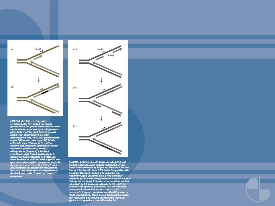 FIGURA 4.33 Regulação do reparo do DNA e recuperação em E.