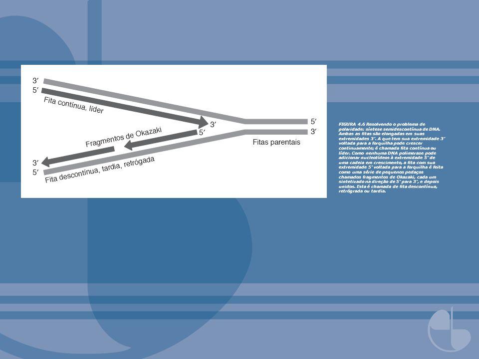 FIGURA 4.7Síntese de DNA em uma forquilha de replicação.
