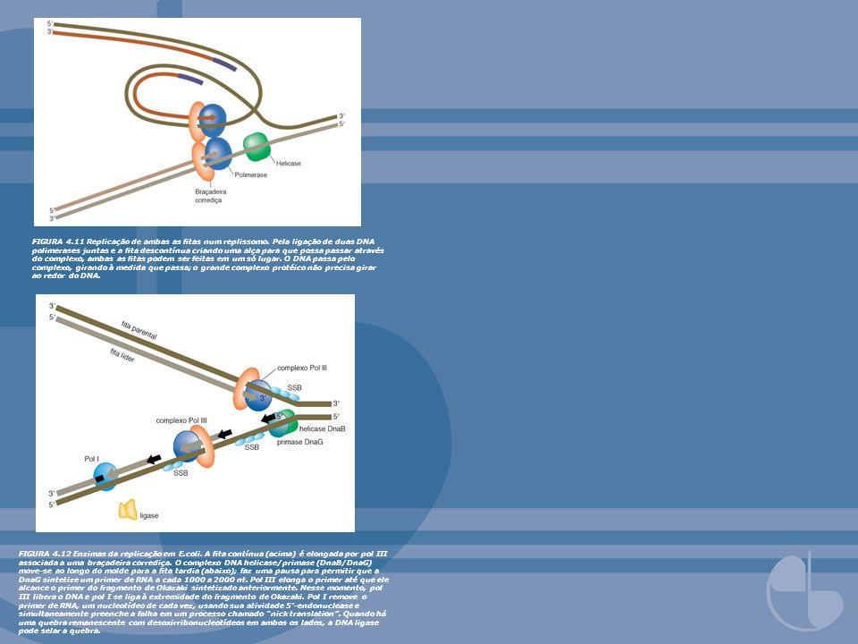 FIGURA 4.13 Enzimas replicando a ta tardia em eucariotos (a ta líder não é mostrada).