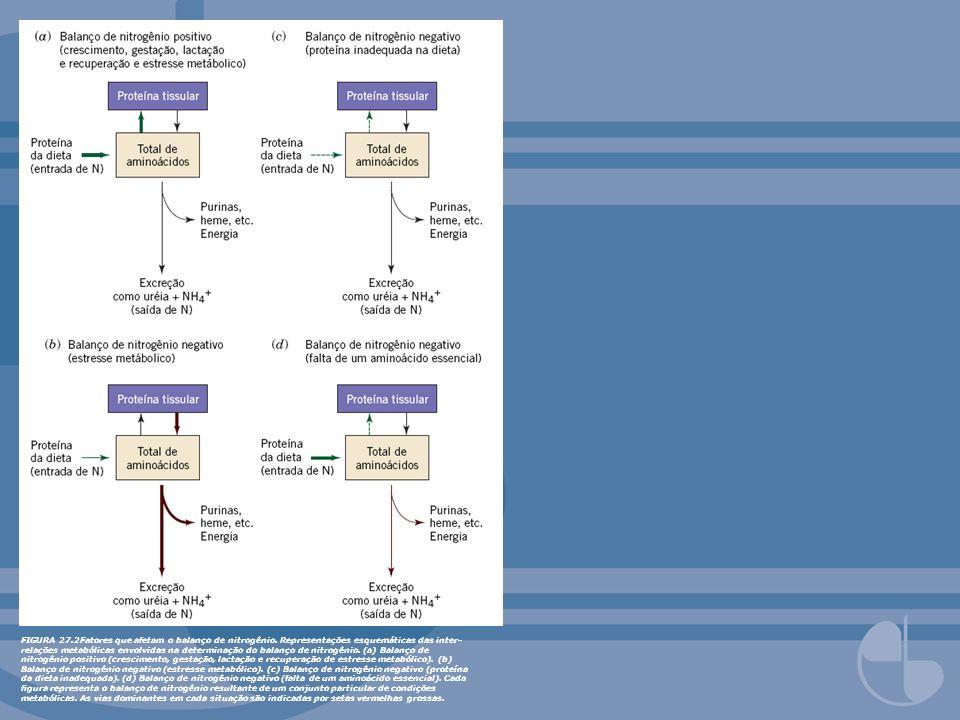 FIGURA 27.2Fatores que afetam o balanço de nitrogênio. Representações esquemáticas das inter- relações metabólicas envolvidas na determinação do balan