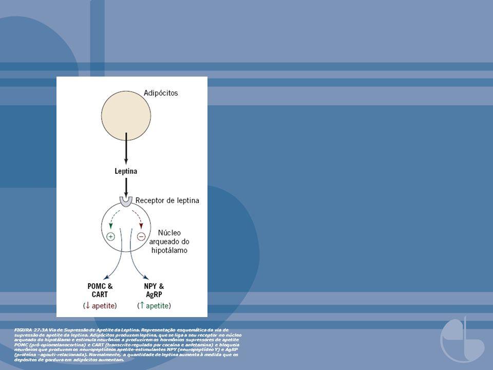 FIGURA 27.3A Via de Supressão de Apetite da Leptina. Representação esquemática da via de supressão de apetite da leptina. Adipócitos produzem leptina,