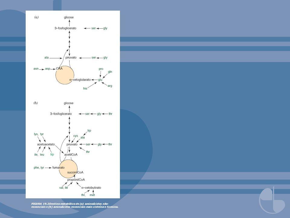 FIGURA 19.16Um único lóbulo hepático.